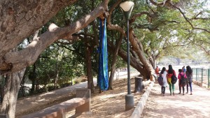 8. A tree branch provides shade and shelter for a makeshift cradle, holding the sleeping child of a street vendor i